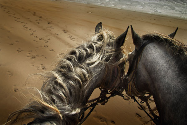 Two horse gently nuzzle heads on a beach
