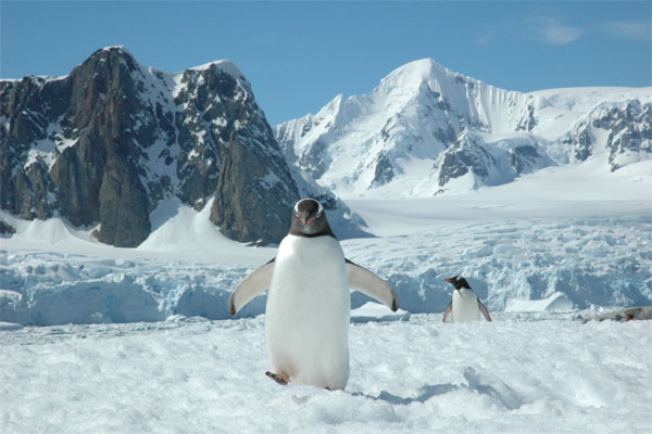 penguin-expedition