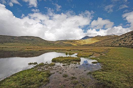 Paramo Laguna, Cotopaxi National Park - Valley of the volcanoes, Ecuador