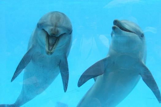 Dolphin swim Coffs Harbour