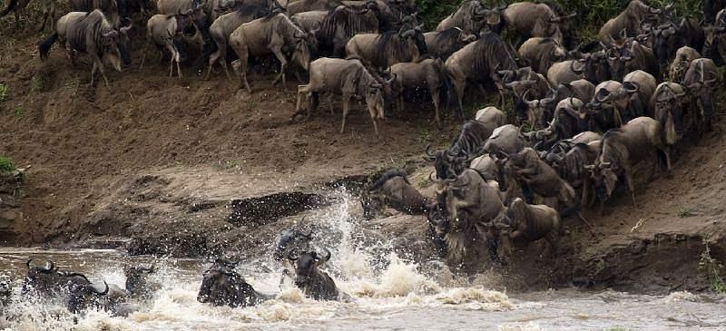 The Great Migration - Mara River, Kenya