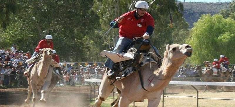 Tongue-in-cheek racing... the Camel Cup