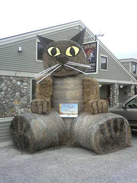 The Killington cat