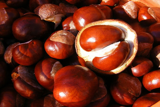 Autumn means Back to School and conkers