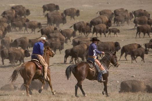 Buffalo Roundup Wranglers
