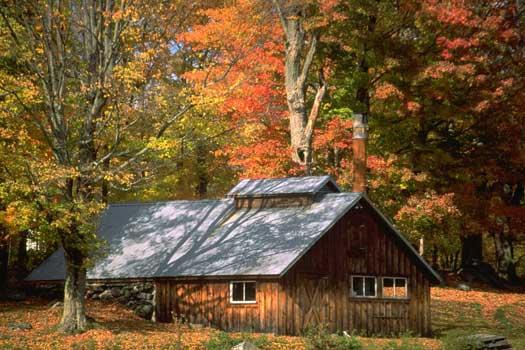 Autumn leaves on the Mohawk Trail, Massachusetts