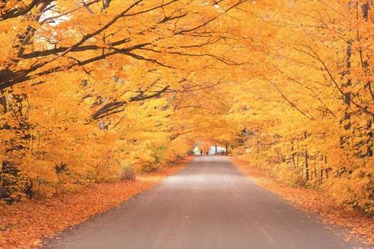 Autumn leaves, Vermont