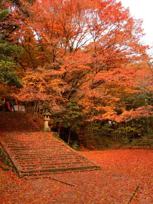 Autumnal foliage in Gakuenji Temple, Izumo City, Shimane Prefecture