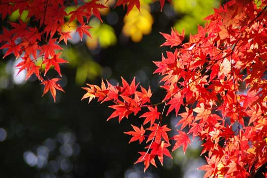 Colourful leaves in Tokyo