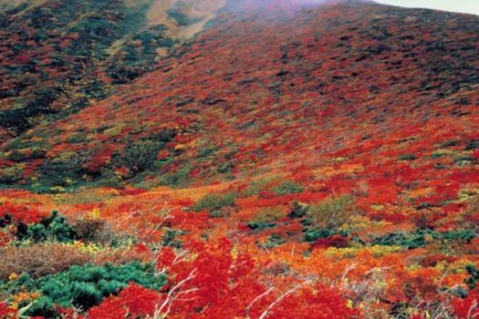 Mt. Kurikoma in Miyagi Prefecture