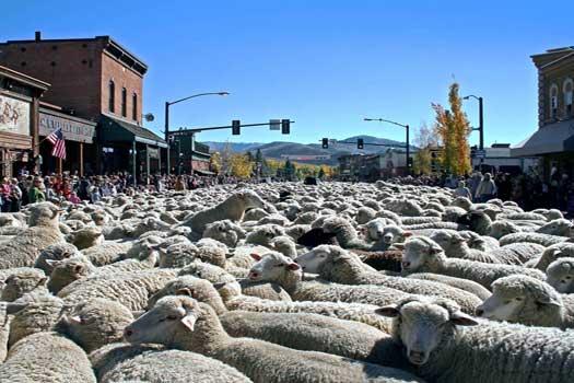 Trailing of the Sheep – Ketchum and Hailey, Idaho, USA