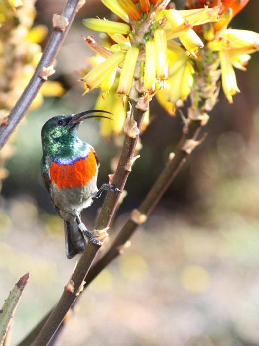 Johannesburg Botanical Gardens, South Africa