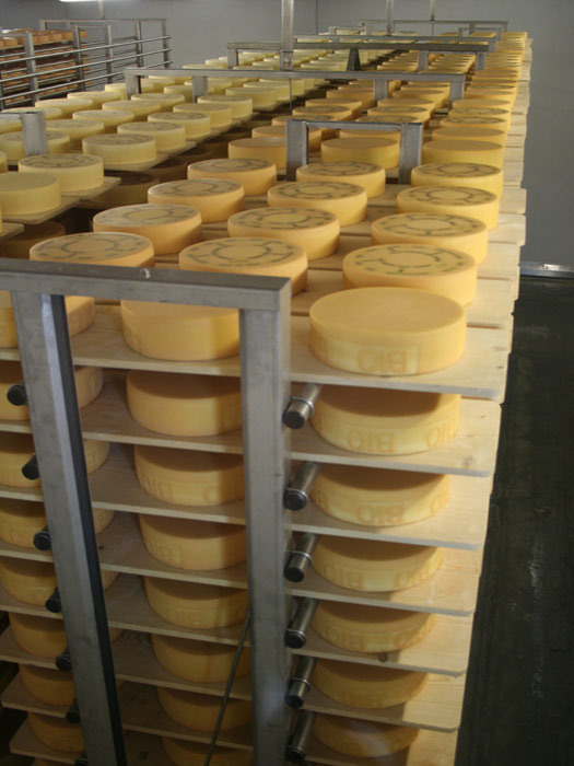 Appenzeller cheese is produced in the Appenzell region of northeast Switzerland