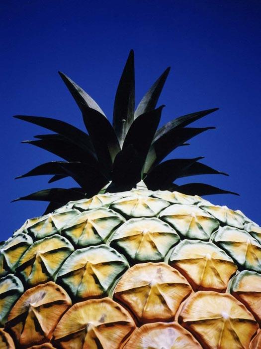 The Big Pineapple, Nambour, Queensland