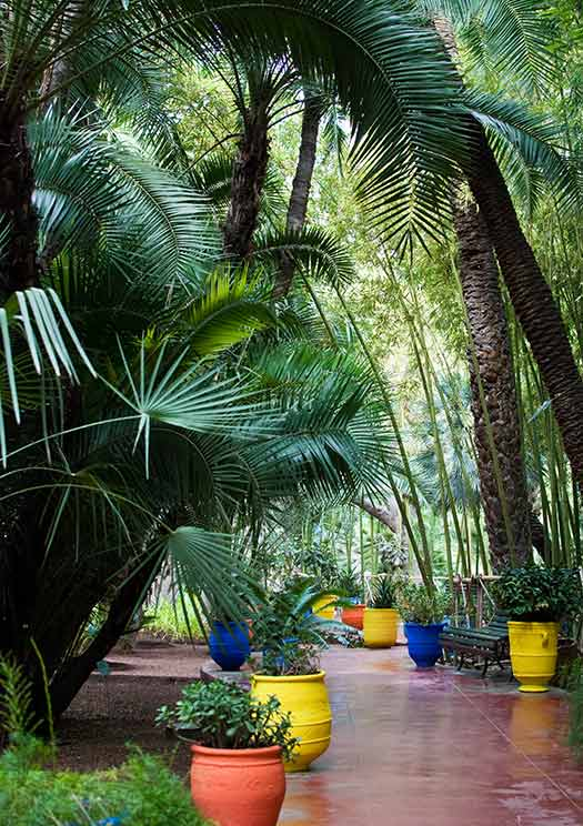 Majorelle Garden, Marrakech - TripAdvisor's most talked about attractions of 2012