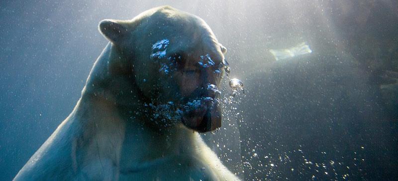Top 5 winter swims
