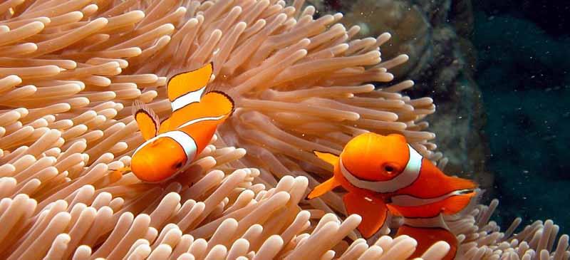 In danger... Great Barrier Reef