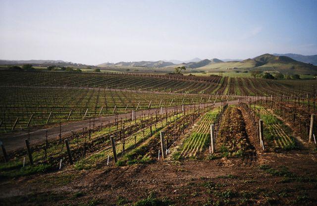 Santa Ynez Valley, Calfornia (Image: AnyaLogic)
