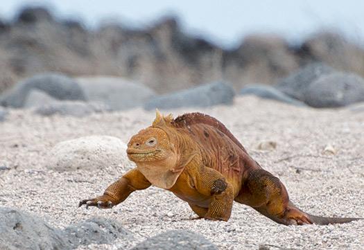 Charles Darwin - Galapagos Islands