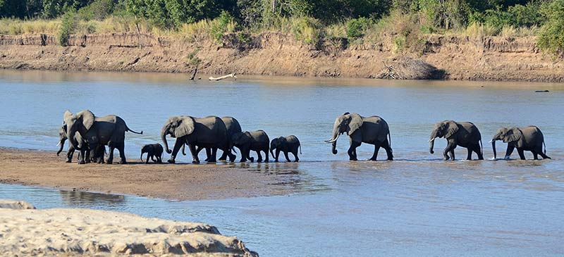 Elephant Luangwa - 10 animals to see in the wild before you die