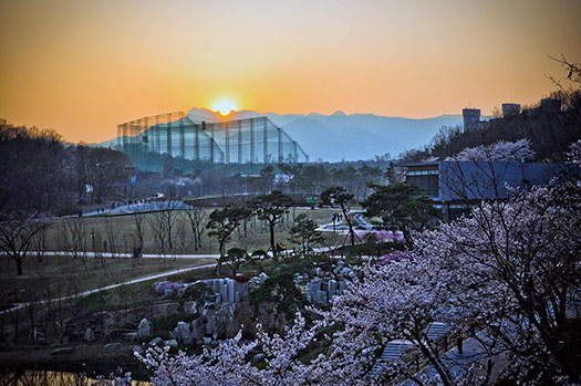 Seoul - Top 5 places to see cherry blossoms