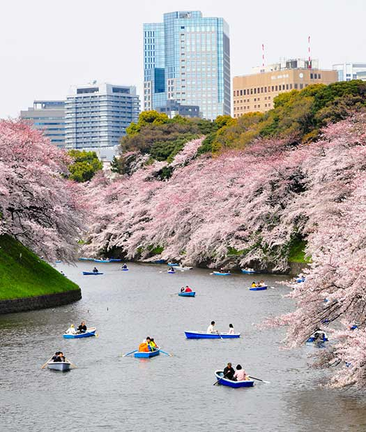 Tokyo - Top 5 places to see cherry blossoms