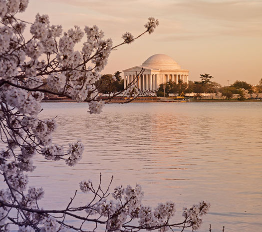 Washington D.C. - Top 5 places to see cherry blossoms