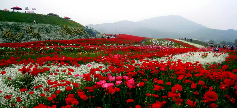 The best times of year to see flowers around the world
