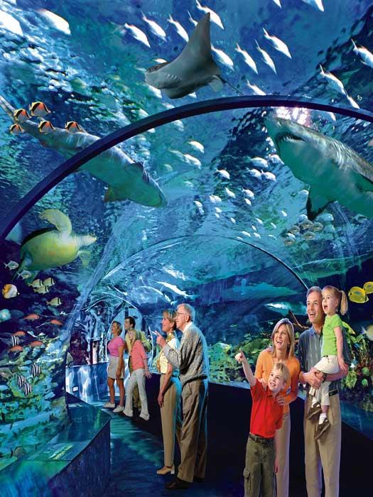 Shark Lagoon at Ripleys' Aquarium of Canada