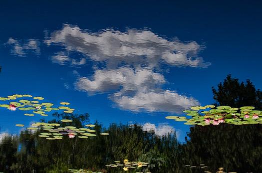 Denver Botanical Gardens in Denver, Colorado, USA