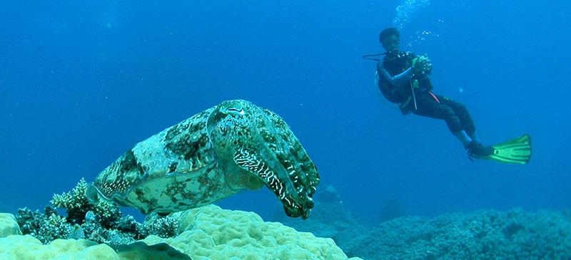 Top 5 Aussie scuba dive sites