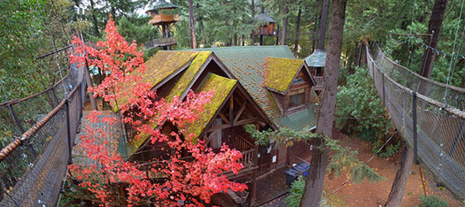 Majestree-Out-n-About-Treesort-3_Top-10-treehouse-stays-in-the-US
