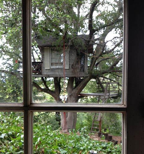 Treehouse Above San Francisco Bay