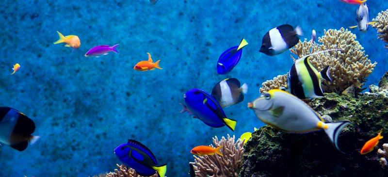Biggest aquariums in the world