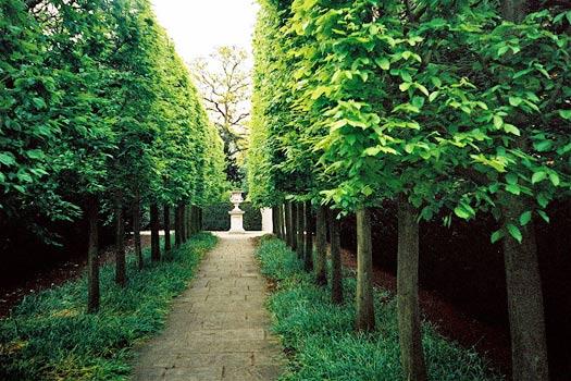Kew Gardens, London. Photo by David Barrie