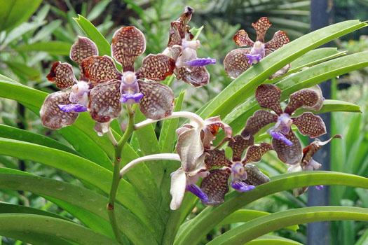 Singapore Botanic Gardens. Photo by Eric Pesik