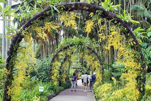 Golden Shower, Singapore Botanic Gardens. Photo by alantankenghoe
