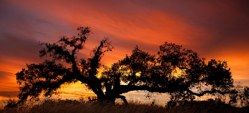 Sunset by Don McCulloughh 800x365
