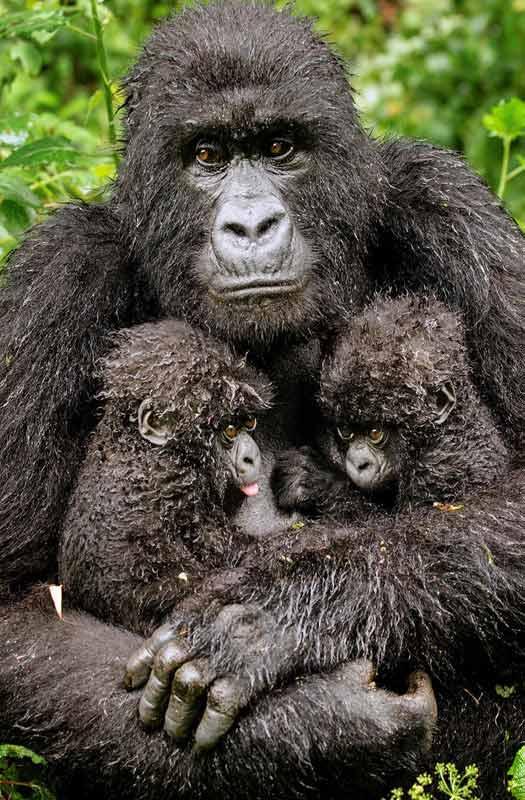 © Diana Webman/Wildlife Photographer of the Year