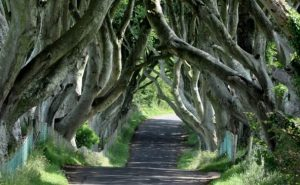 The Dark Hedges - Top 10 trips for TV lovers