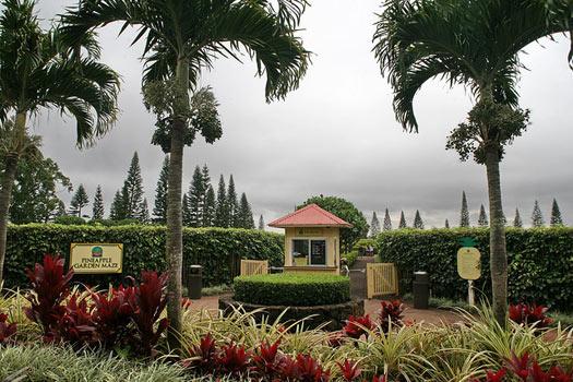 Pineapple Garden Maze, Hawaii