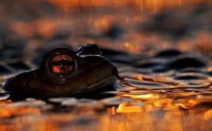 Wildlife Photographer of the Year