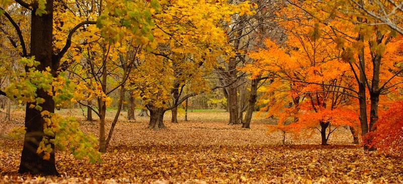 New England fall scenery