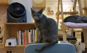6 animal cafes in Tokyo