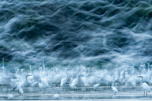 The WINNERS! National Geographic Photo Contest 2013