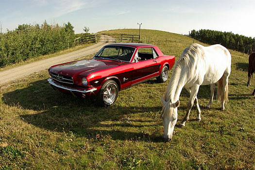 A Mustang and a mustang. Photo by Collector Car Ads
