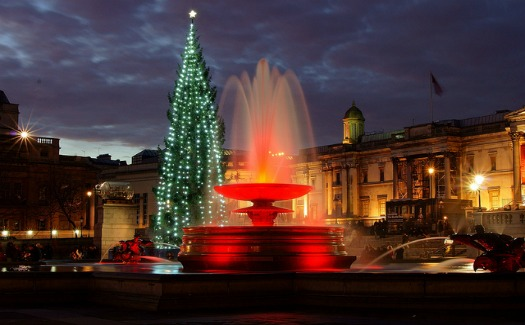 Christmas Tree Roots: 10 Iconic Holiday Trees & Their Origins 5