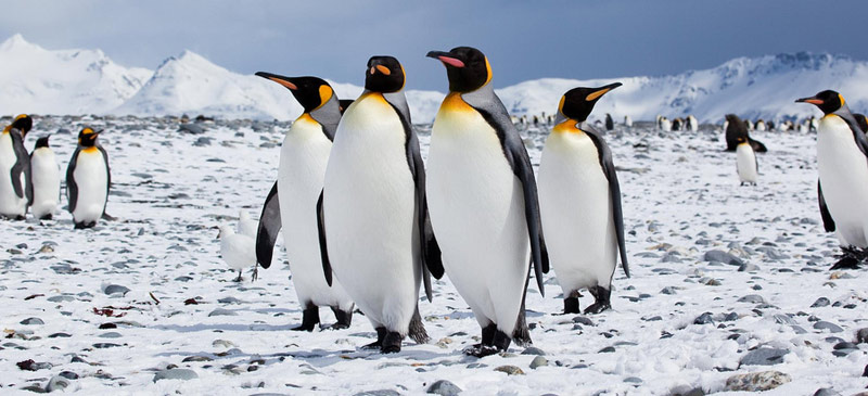 What penguins can teach us about travel 1