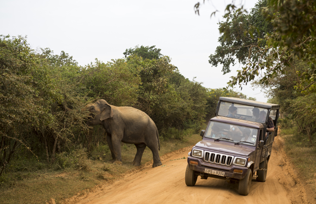 Elephant and safari at Yala National Park in Sri Lanka