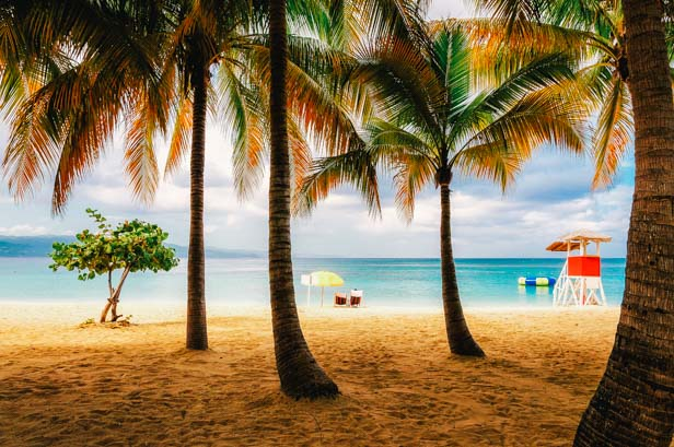Beach in Jamaica with tall palm tree on Caribbean sea